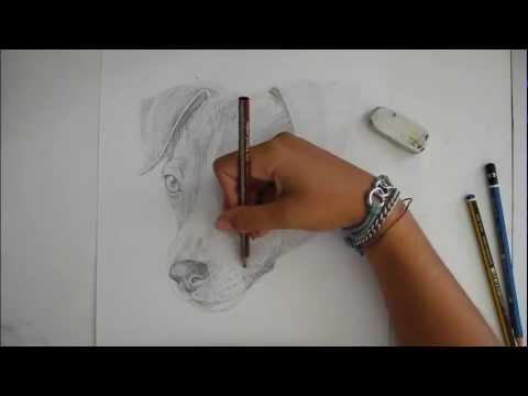 Speedpaint Disegno Di Un Jack Russel Cane Disegno Libero