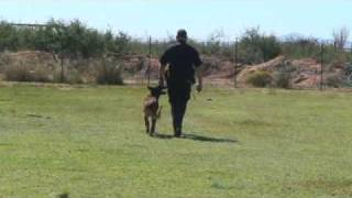 Police K9 Obedience Certification