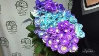 Розы хамелеоны! Цветы, меняющие цвет от смены температуры! Купить в спб и мск с доставкой по РФ