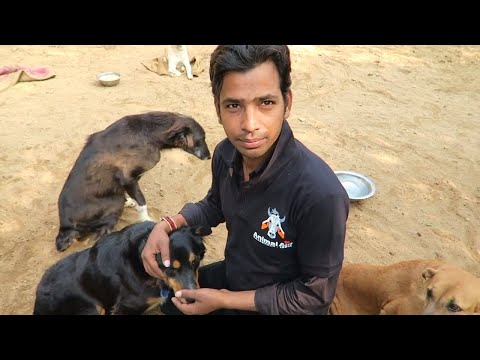 INDIA'S STREET HEROES 🇮🇳 THE PEOPLE OF ANIMAL AID UNLIMITED