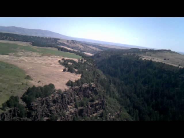 Flight Around Pine Hollow