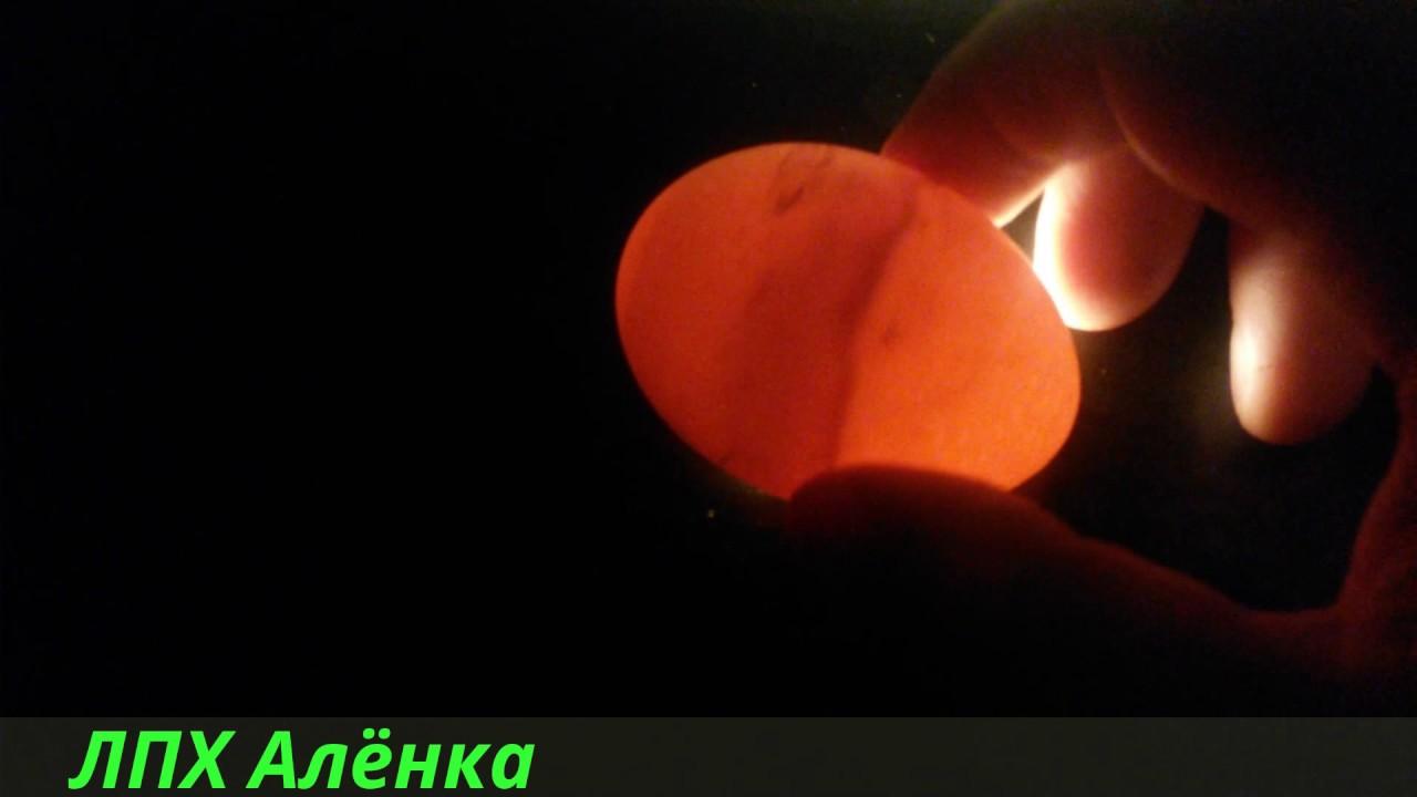 proverka-yaichek-video