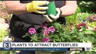 Plants for your yard that could attract butterflies