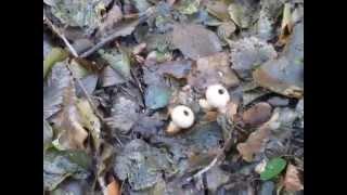 чудо грибочки