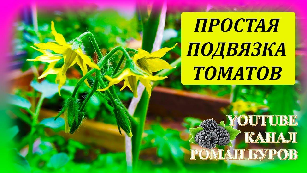 Очень простой способ подвязки высокорослых томатов в теплице. Как подвязать томаты к шпалере.