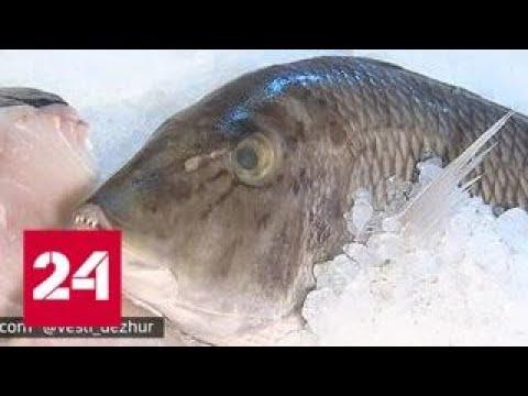 Российская рыба уплывает под заморскими флагами - Россия 24