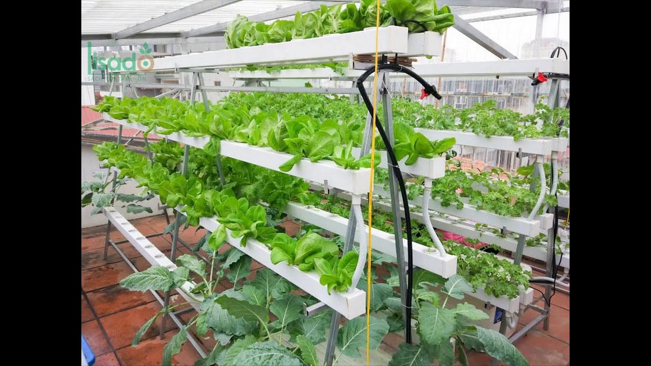Thiết kế giàn trồng rau thủy canh tại nhà đơn giản