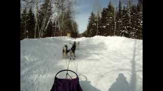 Start Of A Dog Sled Run P.o.v. Musher