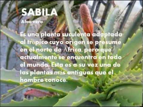 plantas medicinales venezuela youtube
