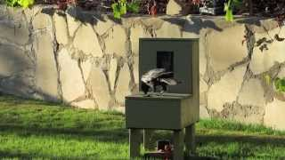 "Crow uses a vending machine #3  ""Crow box"" ""Crow kit"""