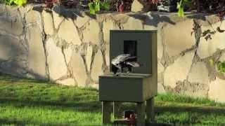 "Crow uses a vending machine #3  ""Crow box"" ""Crow kit"""