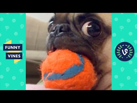 TRY NOT TO LAUGH CHALLENGE   The Best Funny Vines Videos of All Time Compilation #2   April 2018