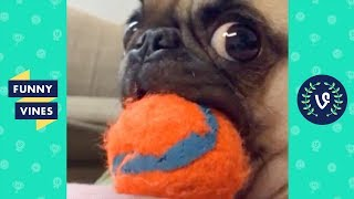 TRY NOT TO LAUGH CHALLENGE | The Best Funny Vines Videos of All Time Compilation #2 | April 2018 thumbnail