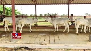 Success Story of Mahabubnagar Farmer | Satisfaction in Agriculture | Nela Talli | HMTV