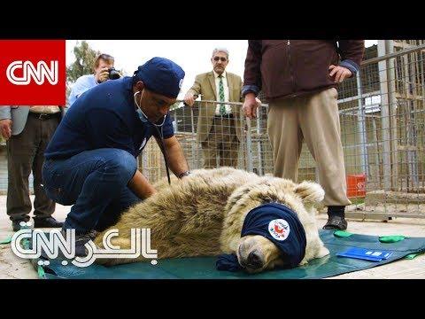 طبيب ينقذ الحيوانات في مناطق الحروب  - نشر قبل 3 ساعة