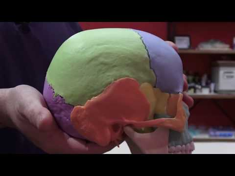 The Importance of Cranial Sacral Therapy