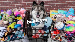 Buying Everything My Dog Touches For Her Birthday!