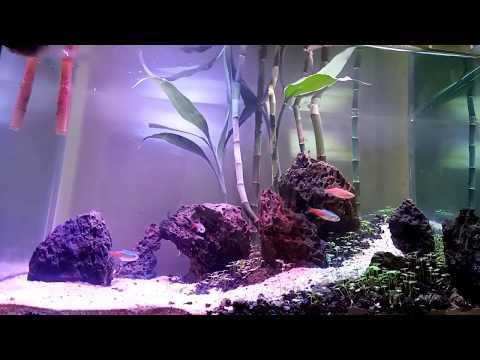 cara-membuat-aquascape-mudah,-murah-dan-simpel-untuk-pemula-(set-up-aquarium-mas-ogi)
