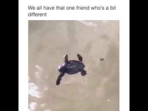 We All Have That One Friend Who S The Bit Different Meme Youtube