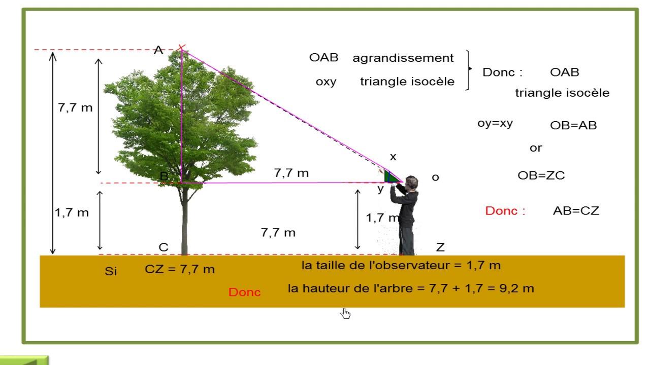 estimation de la hauteur d 39 un arbre youtube. Black Bedroom Furniture Sets. Home Design Ideas