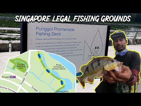 Punggol Serangoon Reservoir Peacock Bass | Singapore Legal Fishing Ground