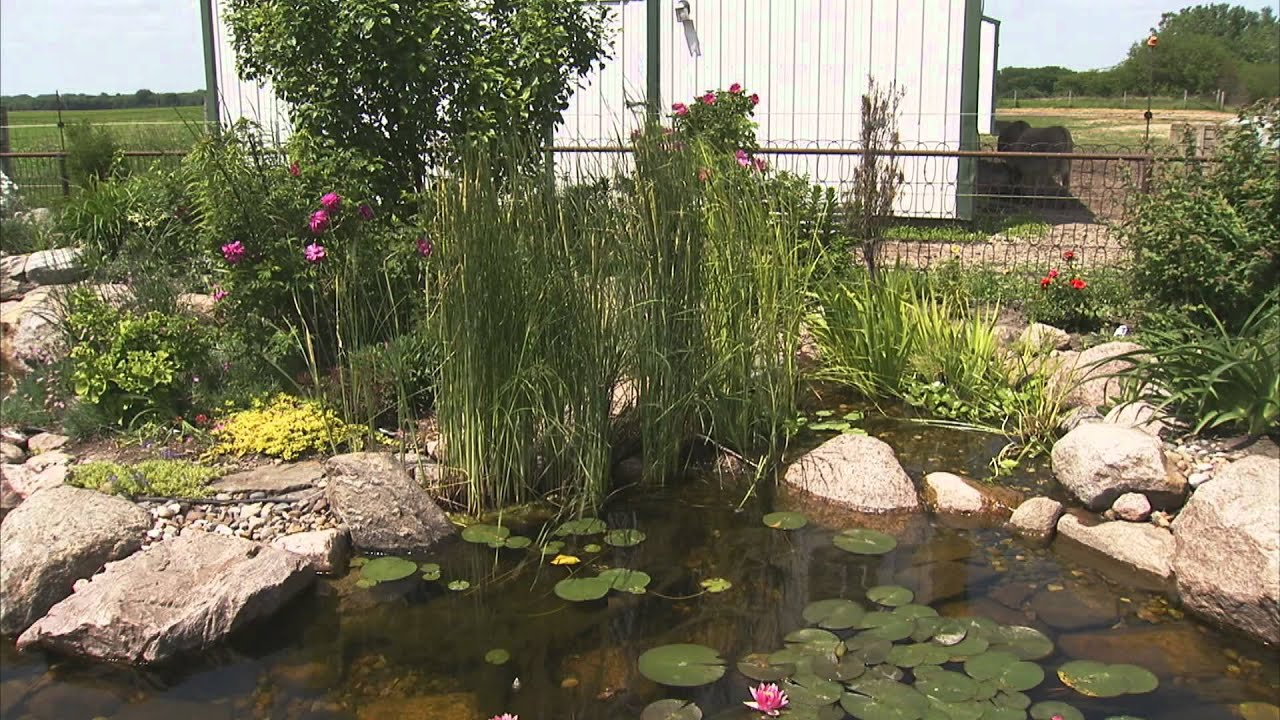 Pond Plants For Your Dream Water Garden