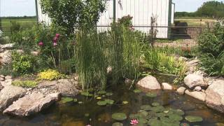 Gardening Tips: Best Plants for a Water Garden