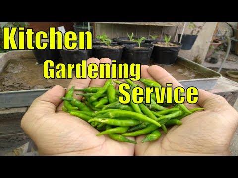 Roza Rekh Kr  Shot Krna Bohat Mushkil Ho Gia  Kitchen Gardening Program