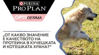От какво значение е качеството на протеина в кучешката и котешката храна?
