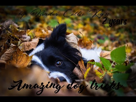 • AMAZING DOG TRICKS by Border Collie Keysi • ♥ 2 years ♥