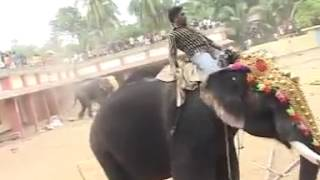 Elephant Rampage in Kerala India
