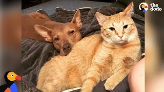 Pit Bull Dog Loves Wrestling With Cat Brother - MAMBA & CHOWDER | The Dodo