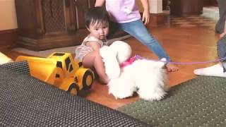 Cute baby scared of toy dog!