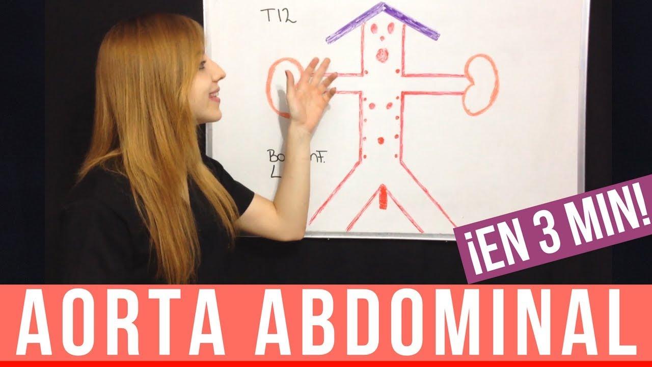 AORTA ABDOMINAL EN 3 MINUTOS! ANATOMIA - YouTube