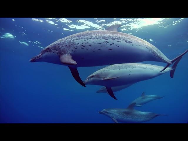 El suroeste de Tenerife es el primer lugar en Europa declarado patrimonio natural para la protección de las ballenas