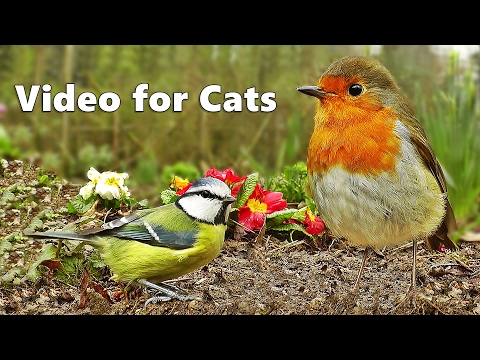 Videos for Cats to Watch : Bird Sounds & Song Extravaganza