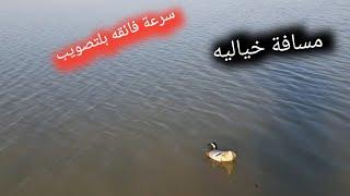 صيد ألطير الحر  ابو دريغ  وسمك الخشني بلسيله سفره متنوعه اهوار سوق الشيوخ