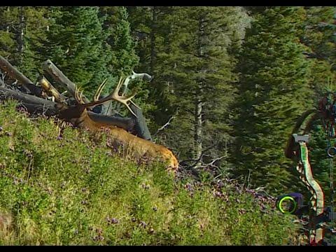 Big Colorado Bull Elk at 10 yards!