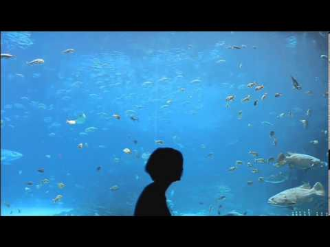 Theory of Mind - Under The Sea