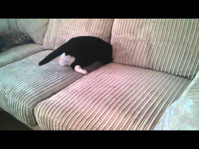 Sofa swallowing cat!