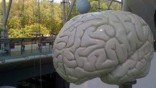 Имитация Мозга.  Искусственный Разум в HD