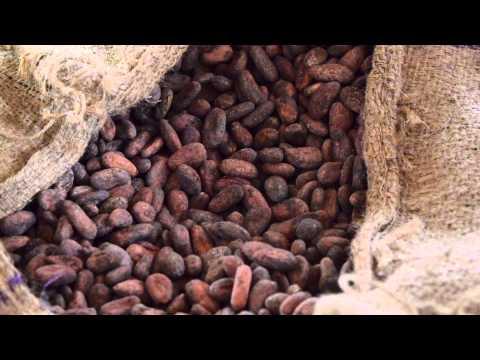 Un cacao rare, bio et équitable au Togo