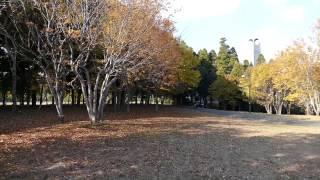 Mシュナウザー花子の旅 2014/ ・♪ LUMIX FZ1000 花の丘公園ドッグラン ...