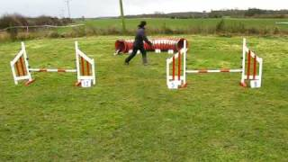 K9 Agility North Yorkshire