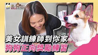 【小資去叨位EP3】美女訓練師到你家 狗狗正向獎勵練習
