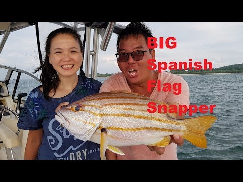 When the REEF FISH ARE HUNGRY S5E13 ONZZ Fishing in Singapore