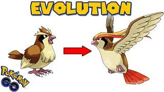 Evolving PIDGEY to PIDGEOT (POKEMON GO EVOLUTION)