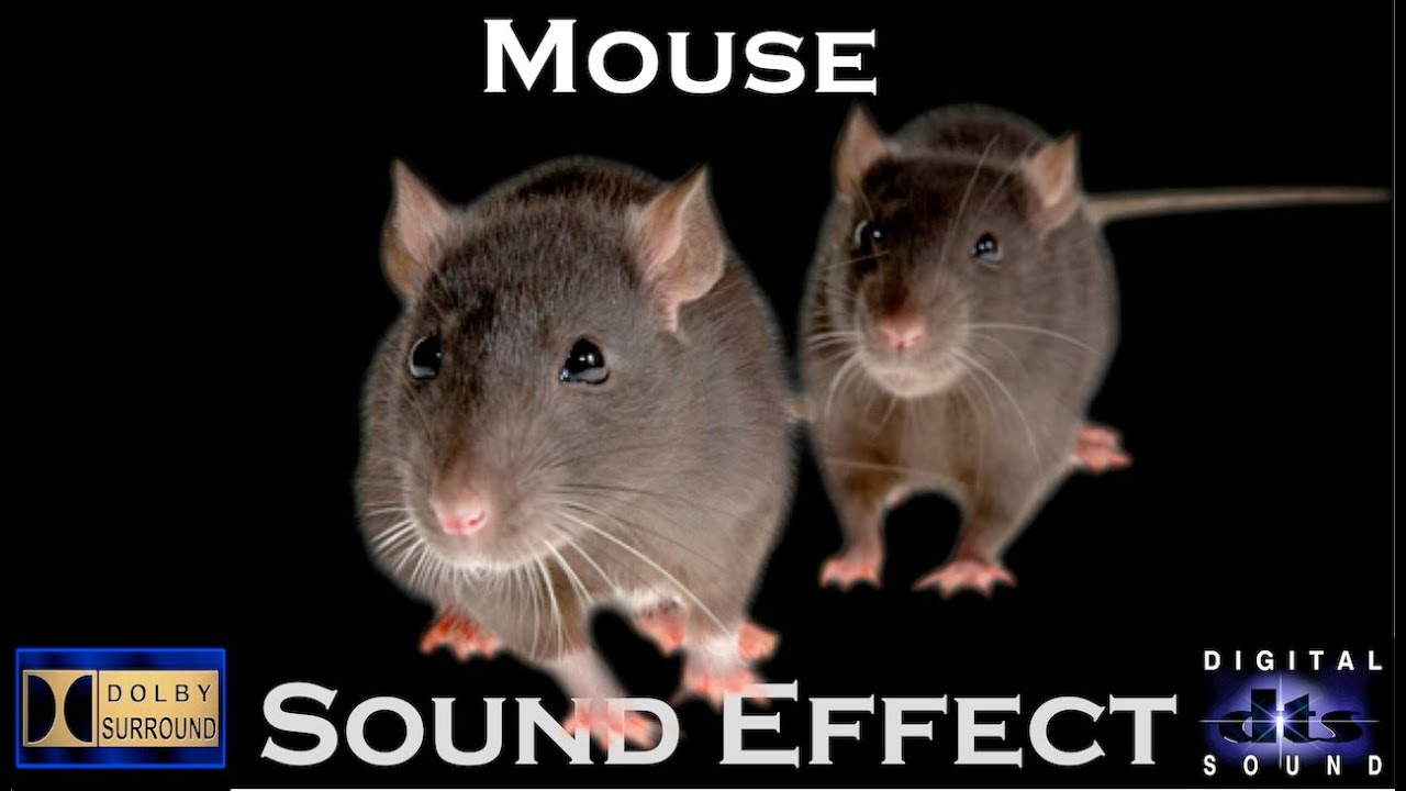 Sound Effects Of Mouse | High Quality Audio