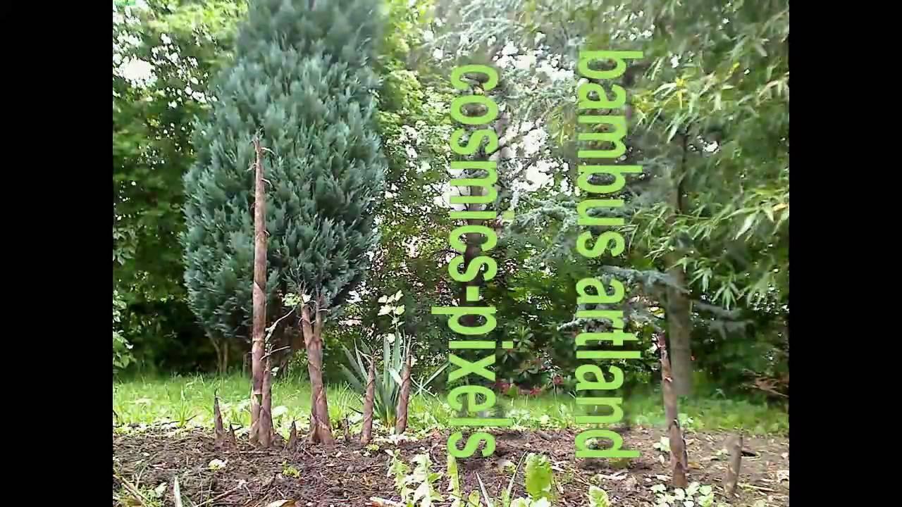 Time Lapse Bamboo Growth Bambussprossen Wachstum Im Zeitraffer