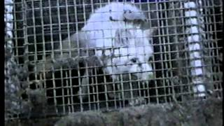 Fur Animals, Trapping and Farming (FOA)